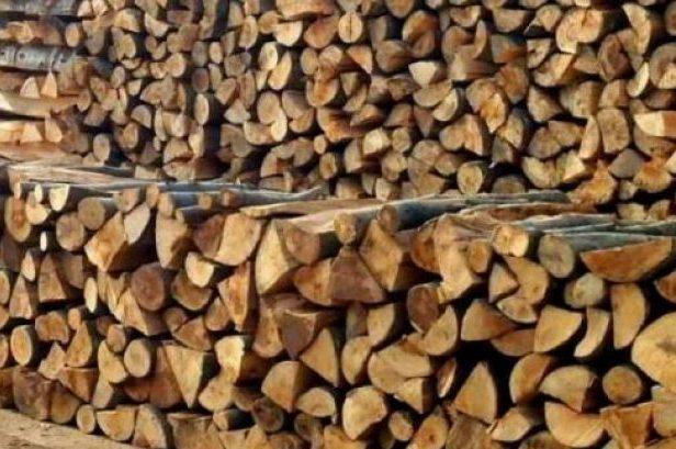 PDK: Jemi të shqetësuar për keqpërdorimet që po ndodhin në njësinë e pyjeve