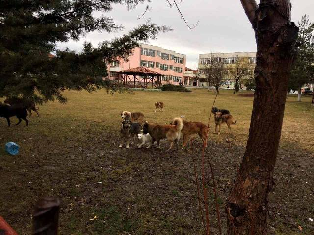 PDK: Edhe çerdhet në Gjilan, rrezikohen nga qentë endacak