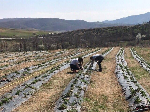Nxënësit e shkollës së Bujqësisë me aktivitete të ngjeshura në kuadër të punës praktike