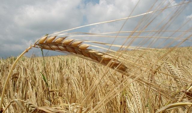 Gjilani nis të hënën fushatën e korrje-shirjeve