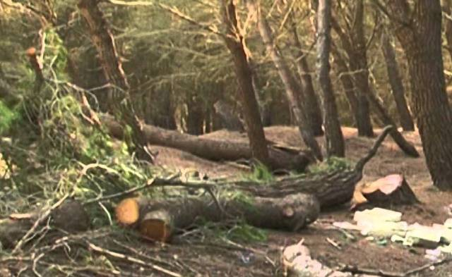 Prokuroria Themelore e Gjilanit ka ngritur një aktakuzë kundër një personi për vjedhje pylli