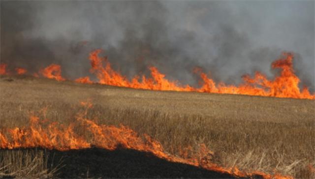 Në Feriqevë të Kamenicës: Zjarri kaplon male e kullosa