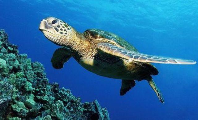 WWF dënon ashpër vrasjen e qëllimshme te breshkës së detit