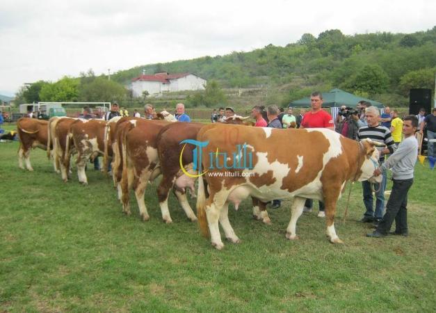 Ekspozita e lopëve mbahet më 30 shtator në Bujanoc