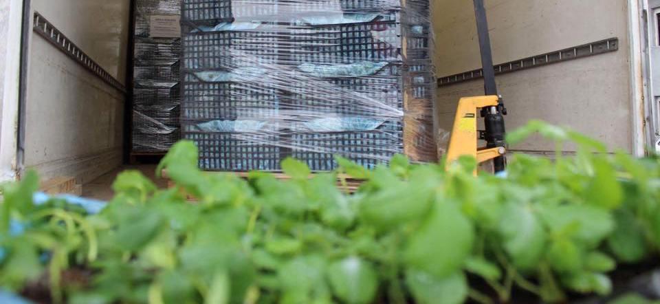 Dhjetë fermerë vitias përfituan fidane të dredhëzës
