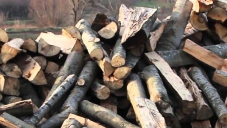 Ndalohet nga policia për vjedhje të pyllit