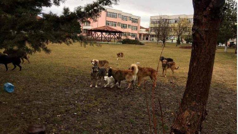 FAUNA: Ka filluar projekti për menaxhimin dhe kontrrollin e qenve endacak