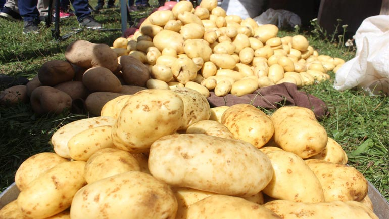 Komuna e Vitisë shënon Ditën e Patates në Debelldeh të Vitisë