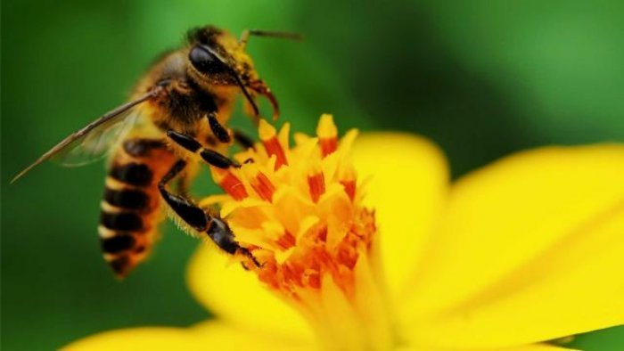 Insektet po zhduken paralajmërojnë shkencëtarët