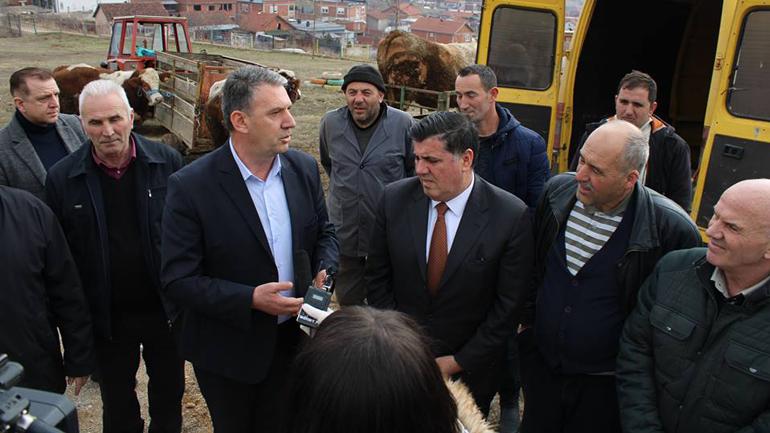 Komuna shpërndan pesë gjedhe të racës simental për farmerët e Gjilanit për përmirësim racor