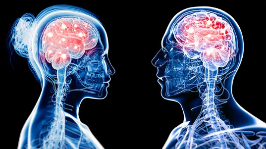 Studim i ri, dallimi mes trurit të burrit dhe gruas