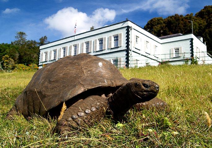 Breshka më e vjetër në botë, ka kaluar dy luftëra botërore