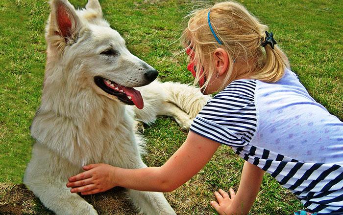 Kush nuk kujdeset ndaj kafshëve mund të dënohet