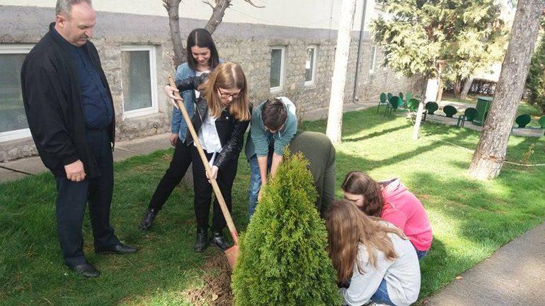 Në ditën e pranverës mbjellin pisha