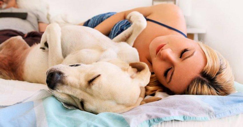 Qeni të sjellë lumturi më shumë se maceja, e thotë studimi