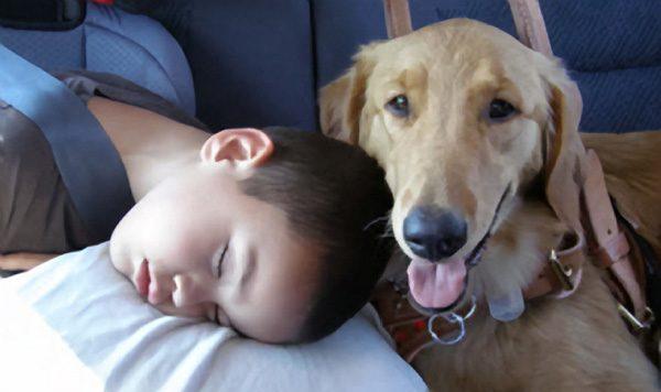 Studim i ri, qentë detektojnë sëmundjet e njeriut
