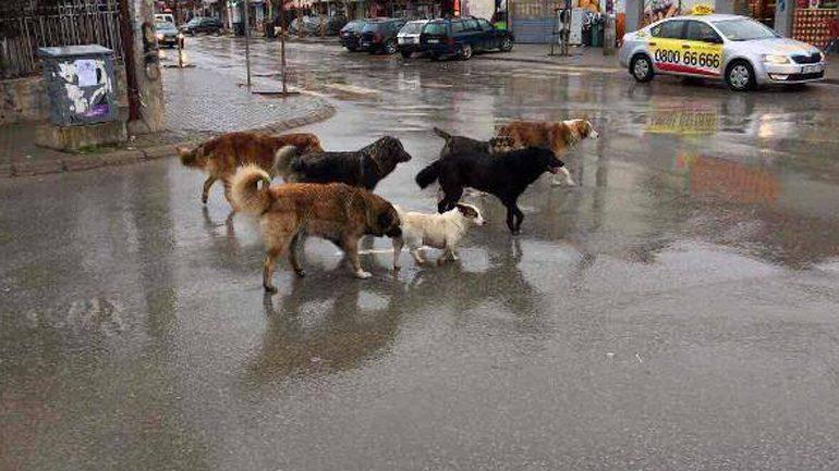 PS-UP kërkon largimin e qenve nga hapësirat e UP-së dhe rrethimin e Kampusit