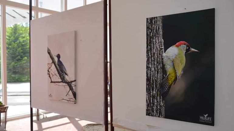 """""""Wildlife Albanian Photographers"""" organizuan ekspozitë për promovimin e faunës së trevave shqiptare"""