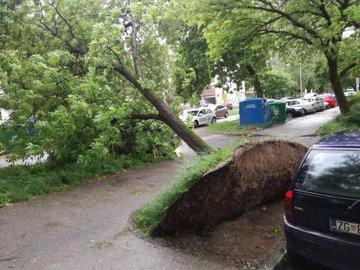 Stuhi në Kroaci, era e fuqishme shkul drunjët dhe semaforat
