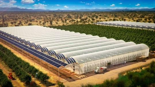 Shkretëtira në Katar kthehet në tokë bujqësore