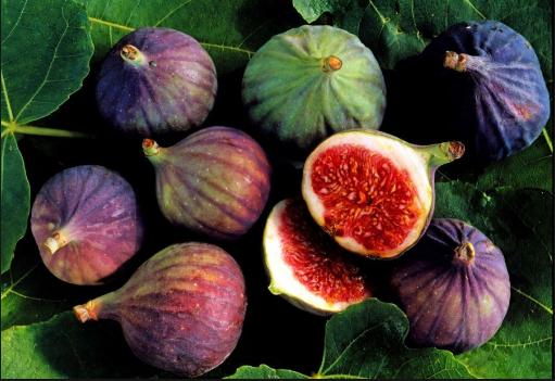 Fiqi frut efikas për kocka dhe sistemin tretës