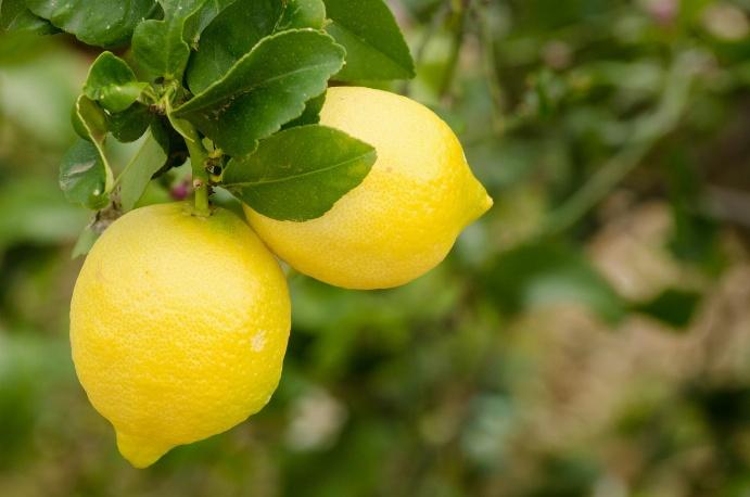 Limoni burim i vitaminës C, eviton sëmundjet e zemrës