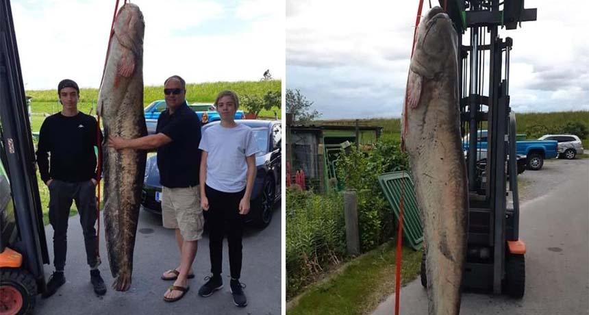 Kapet peshku gjigant në Gjermani, nuk do ta besoni peshën e tij!