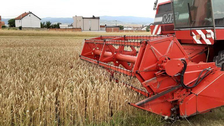 Gjilani ka nisur zyrtarisht fushatën e korrje-shirjeve, gjendja e grurit më e mire se sa pritshmëritë