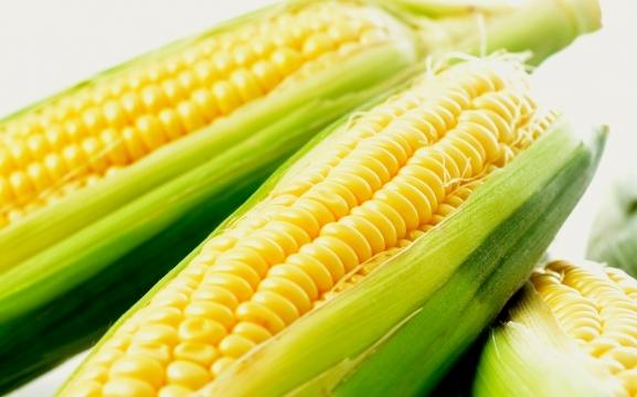 Përfitime të mëdha shëndetësore nga misri
