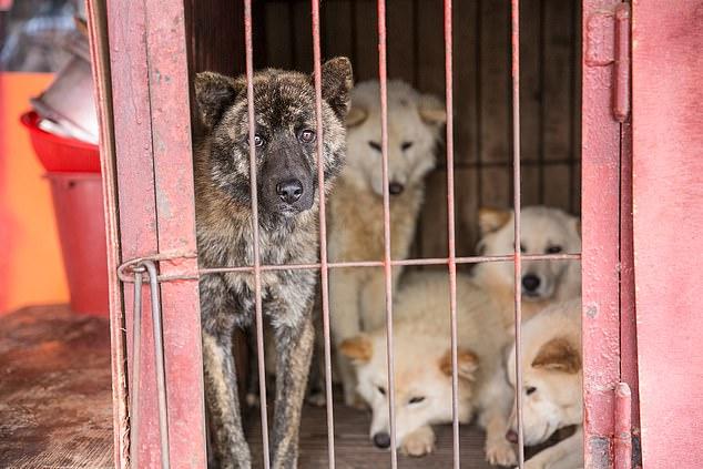 Mbyllet tregu që shiste mish qeni