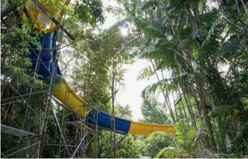 Topogani më i gjatë në botë, 'udhëtim' nëpër xhungël