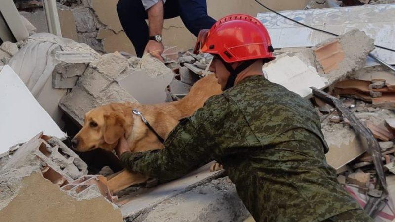 'Heroi' i FSK-së: Qeni i trajnuar shpëton tre persona në Shqipëri
