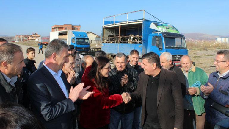 Kida Gërguri: Nuk ka asnjë shkelje në projektin e shpërndarjes së 35 lopëve qumështore