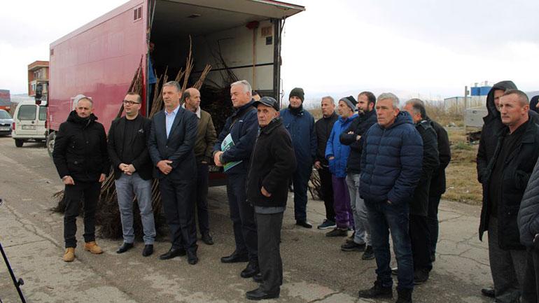 Gjilani shpërndan fidane të arrës për 22 fermerë për ngritjen e 15 hektarëve
