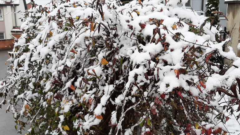 Mot i vranët dhe me reshje bore