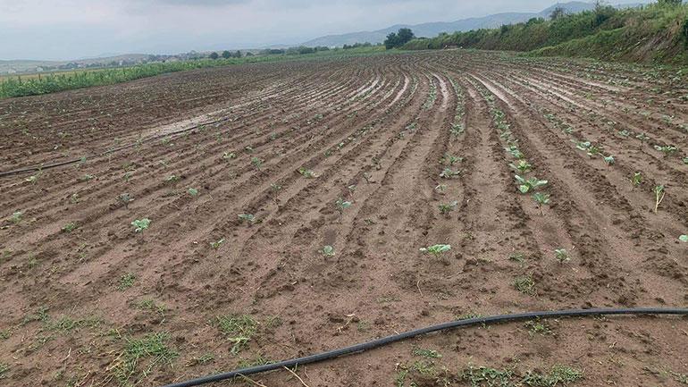 Dalin në terren për të vlerësuar dëmet e shkaktuar pas reshjeve të shiut e breshrit
