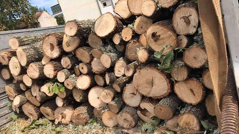 Ia konfiskojnë drutë